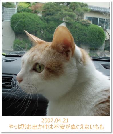 20070421.jpg