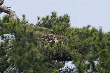 カヤック 3 ミサゴの巣