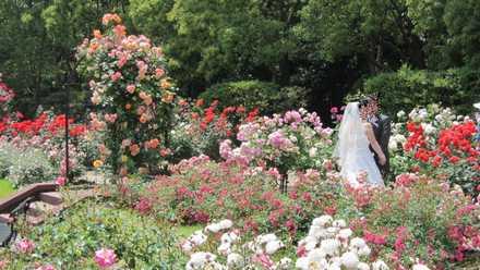 結婚式写真 2