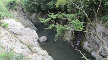 魔林峡 5