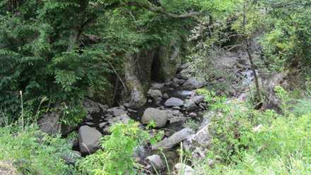 魔林峡 7