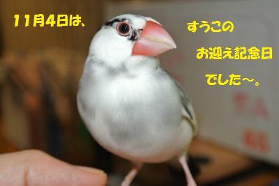 DSC_2354貂・convert_20141107225543