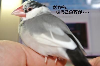DSC_2476貂・convert_20141130215931