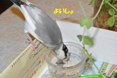 DSC_2481貂・convert_20141207223955