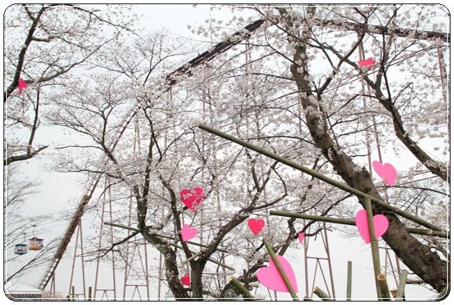 桜とジェストコースター
