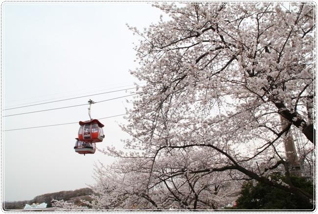 ゴンドラと桜