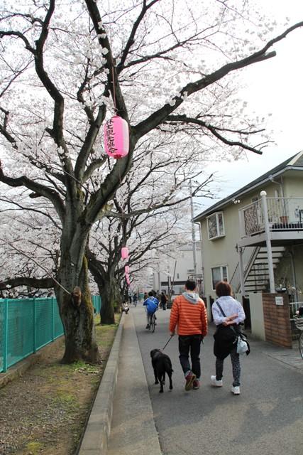 麻生川桜⑱