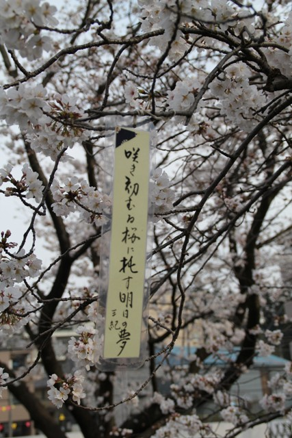麻生川桜⑮
