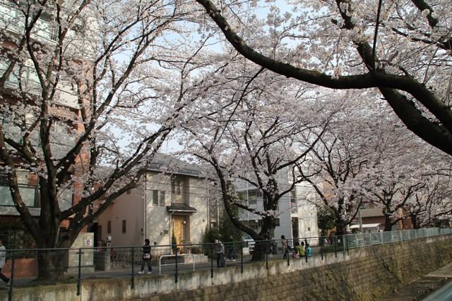麻生川桜⑨