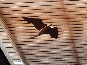 flap_bird_001