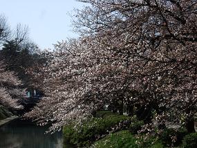 sakura_2010_04040002