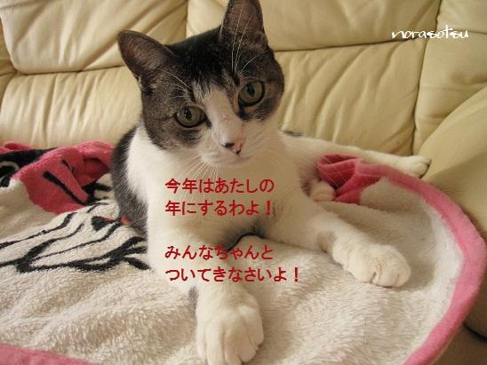 004_20120102104217.jpg
