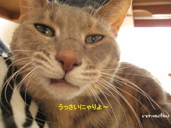 019_20120210191022.jpg