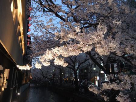 高瀬川の桜6