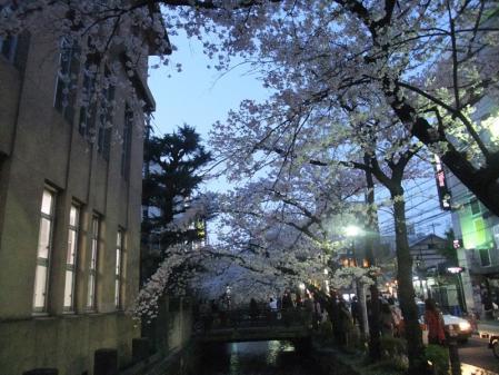 高瀬川の桜4
