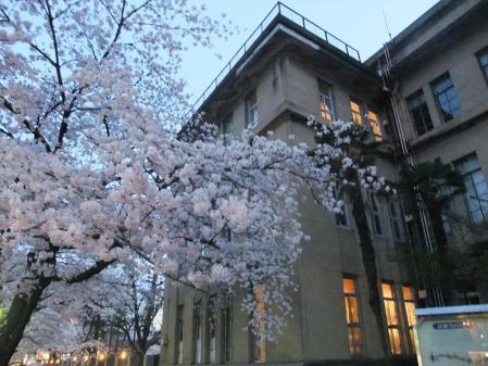 高瀬川の桜12