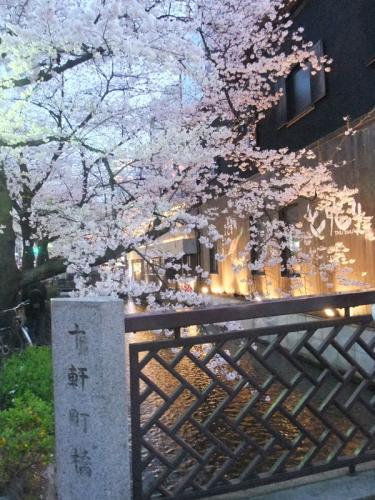 高瀬川の桜11