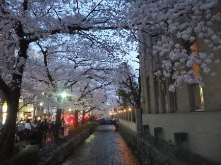 高瀬川の桜13