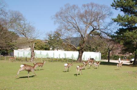 奈良の鹿12