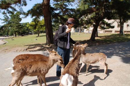 奈良の鹿11