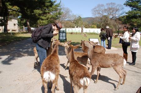 奈良の鹿10