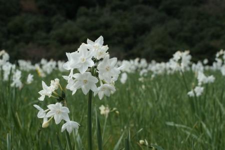 0103_awajishima3.jpg