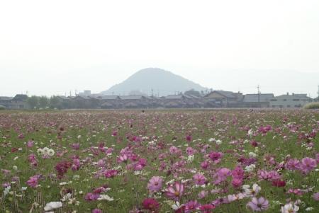 1010_asuka9.jpg