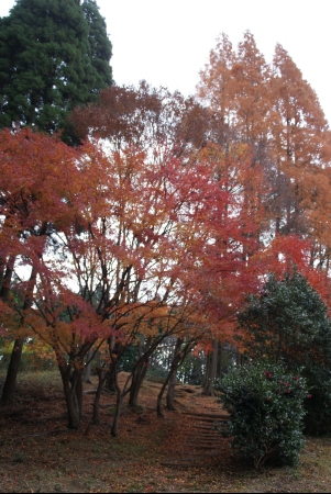 1203_sagoshi1.jpg