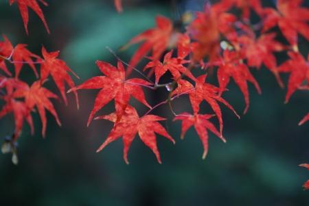 1203_sagoshi5.jpg