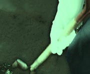 h14スコップ穴掘り180