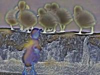 birdchildren001.jpg