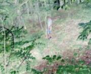 boy05fromwoods.jpg