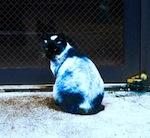 cantcat150.jpg