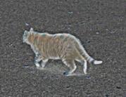catwalking01n200.jpg