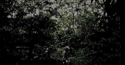 darkwoods03n400.jpg