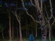darkwoods04n.jpg