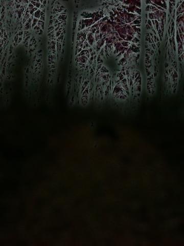 darkwoods05n.jpg