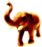 elephant01x160.jpg