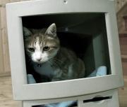 hikkycat.jpg