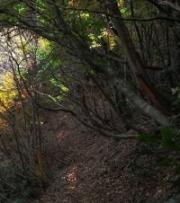 woods02mamushi200px.jpg