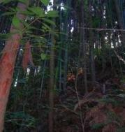 woods04bamboo02x200px.jpg