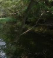 woods05irezumi01x200px.jpg