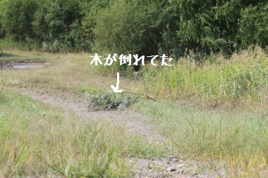 2011sunagawa09_0144.jpg