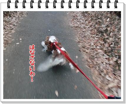 0620110106.jpg
