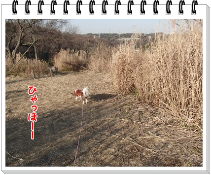 0720110110.jpg
