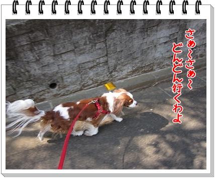 2011043001.jpg