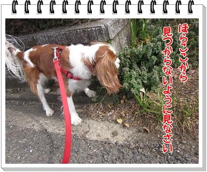 2011050203.jpg