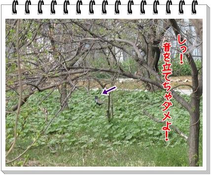 2011050204.jpg