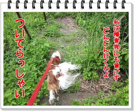 2011051504.jpg