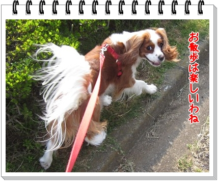2011052906.jpg